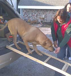 Saltofamerica Article Help A Gimpy Dog Build A Dog Ramp